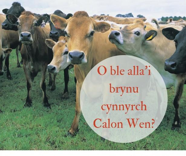 O ble alla'i brynu cynnyrch Calon Wen-